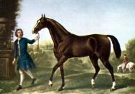Darley araberen menes at være stamfader til fuldblodshestene. Maleri: John Wotton, 1722.