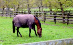 IrishStudFarm_GaleForceTen_red
